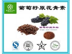 葡萄籽原花青素 葡萄籽提取物 原花青素95 原花青素98