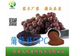 原花青素厂家供应葡萄籽提取物95%/98%多年主打产品