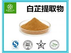 白芷提取物 水溶白芷粉 扶风斯诺特厂家 供应天然原料粉