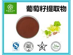 葡萄籽提取物95%原花青素 斯诺特集团工厂 批发零售