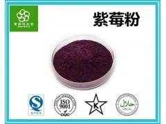 紫莓粉 黑豆果粉 黑加仑果粉 黑醋栗果粉 大量现货批发价