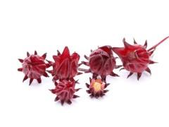 供应优质浓缩果汁发酵果汁玫瑰茄(洛神花)汁