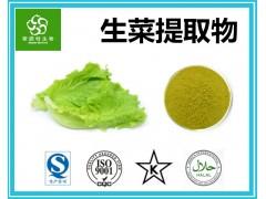 生菜提取物 生菜粉 蔬菜粉源头厂家 专业生产供应