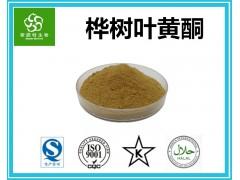 桦树叶黄酮 10%~40%桦树叶提取物 黄酮提取厂家供应