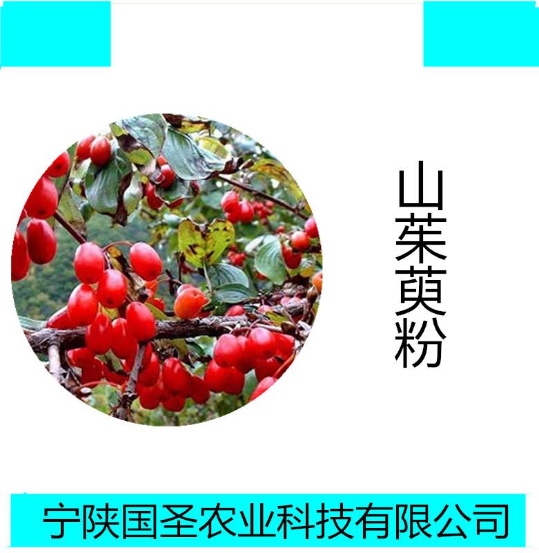 山茱萸_副本