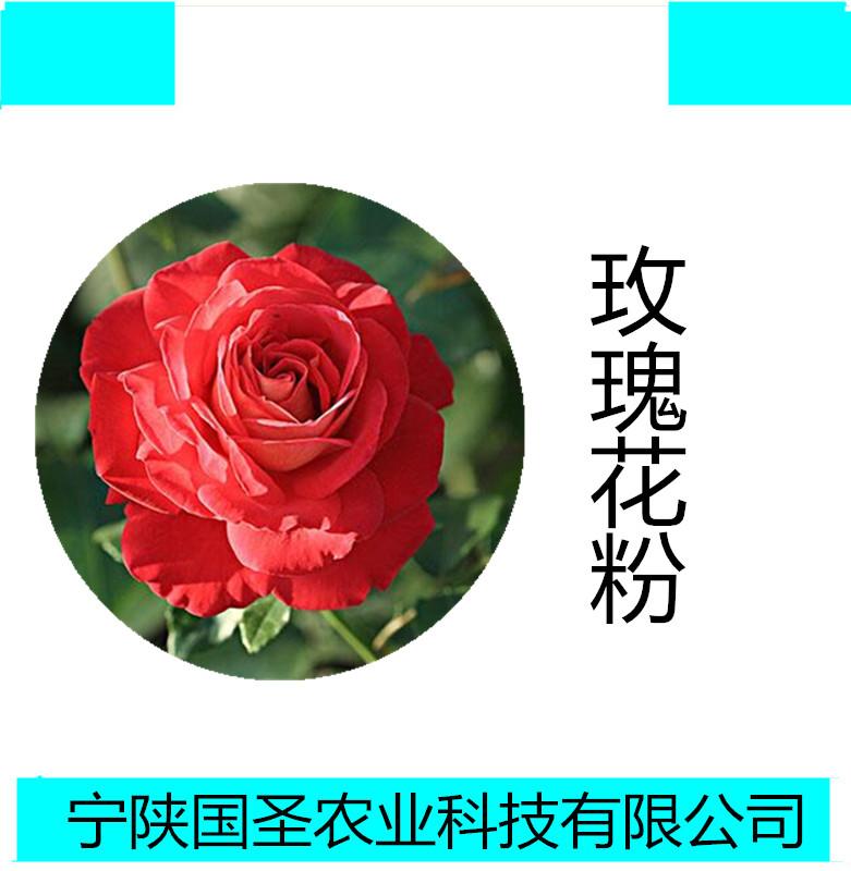 玫瑰花_副本