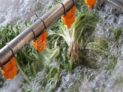 蔬菜清洗流水線  韭菜高壓噴淋清洗機 山野菜清洗機