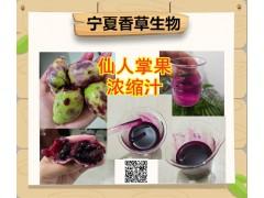 仙人掌果原浆批发 仙人掌果浓缩汁 鲜汁生产厂家