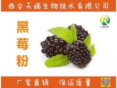 黑莓粉 果蔬粉 冲调饮品 喷雾干燥粉 果汁粉