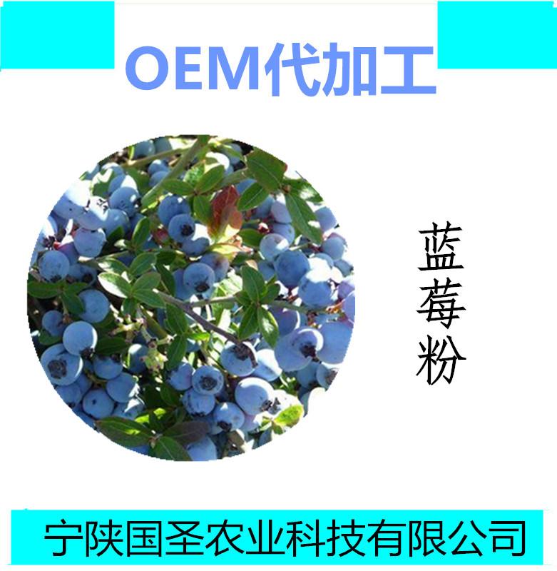 蓝莓1_副本