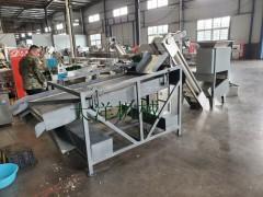 厂家直销专业生产蒜种破瓣分选设备 经济实惠的蒜种加工流水线