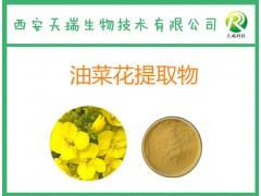 油菜花提取物 10:1 厂家现货供应 天然油菜花粉