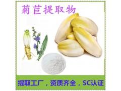 菊苣提取物 药食两用 菊苣粉