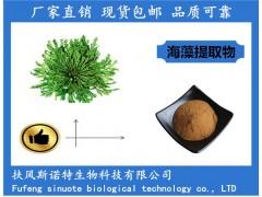海藻提取物 10:1海藻粉厂家供应