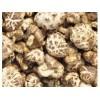 求�香菇.黑木耳.�y耳.松茸.羊肚菌.竹�p.猴�^菇.�`芝