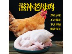 农家老母鸡清真土鸡走地笨鸡散养现宰整只白条鸡厂家直销