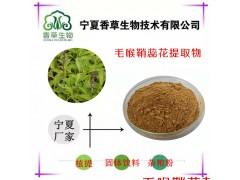 毛喉鞘蕊花提取物 弗斯可林10% 20% 毛喉鞘蕊浓缩粉