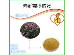 紫�F菊多酚4%�r�I用原料紫�F菊提取物�F�