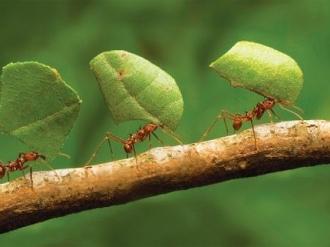 """职场中看起来没那么忙的""""懒蚂蚁"""",很重要!"""